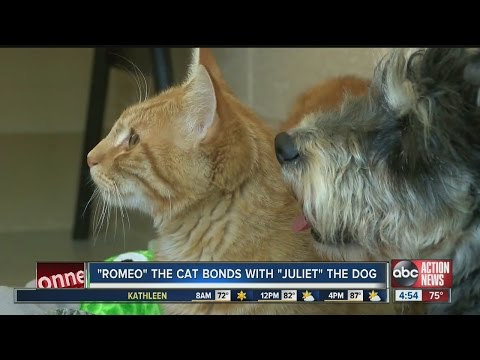 'Romeo' the cat, bonds with 'Juliet' the dog