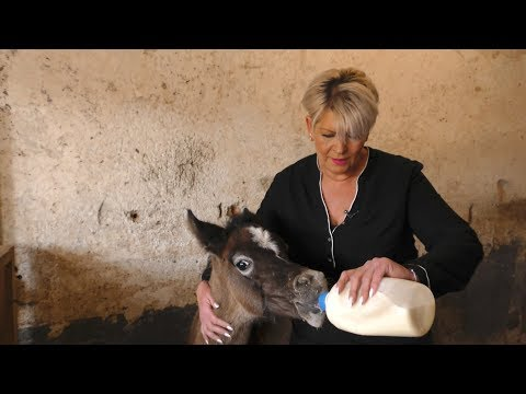Verstoßene Pferde: Fohlen-Retterin Gitti hilft in der Not | BR24