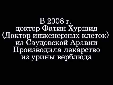 Исламская медицина о верблюжьей урине ответ на imarattv) - YouTube