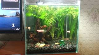 Мой аквариум на 15 литров