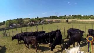 Journée privée en pays tri pour la course de vaches 07 Juin 2015
