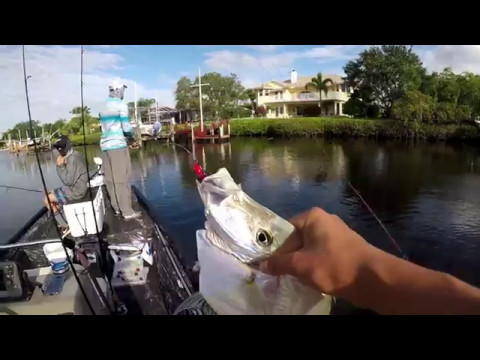 Fishing The Loxahatchee River