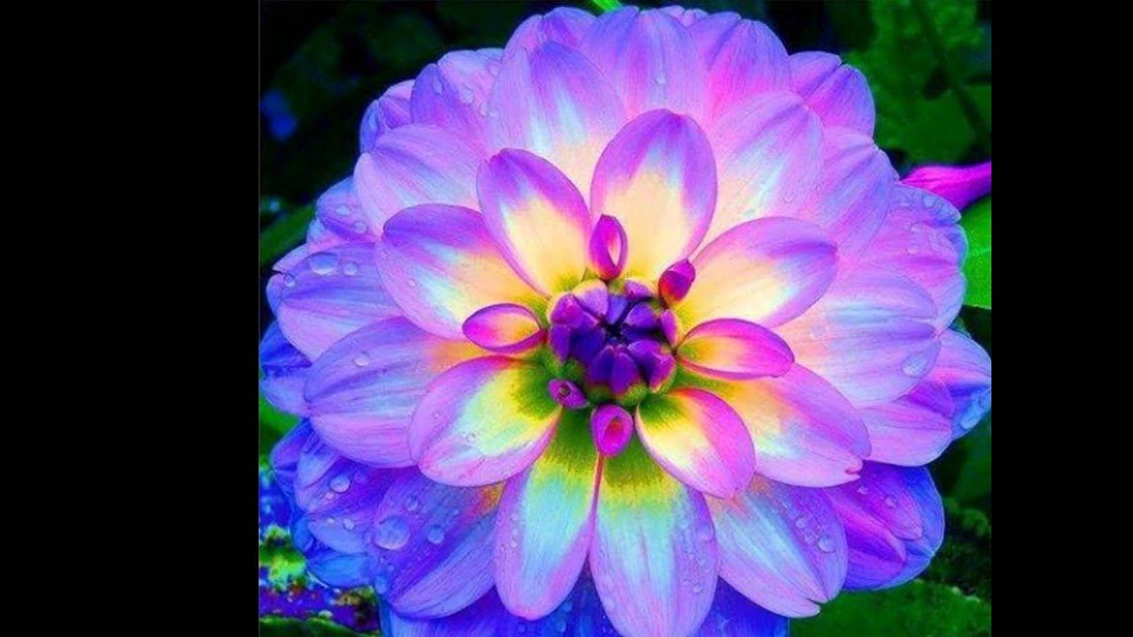 Resultado de imagem para fotos de flores