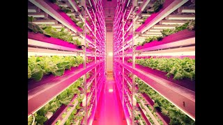 Indoor-Farming-Sixty-Seconds-Solution