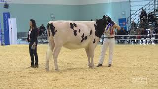 Suprême Laitier 2017 - 1 an Intermédiaire - Holstein