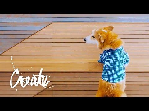 Internet-Famous Pets | Adobe Creative Cloud