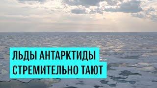 Таянье ледников Антарктиды