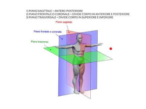 Anatomia lezione 1 piani del corpo youtube for Piani di progettazione del padiglione