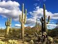 27087 N 90th St, Scottsdale, AZ, 85262