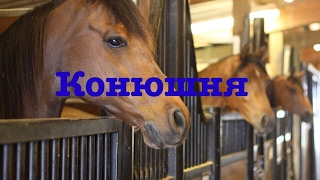 "VLOG/КСК ""Битца""/КОНЮШНЯ#2"