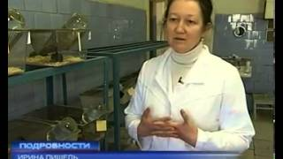 Ежегодно в Украине погибают тысячи лабораторных крыс(Ежегодно в Украине погибают тысячи лабораторных крыс   Annually in Ukraine kill thousands of laboratory rats., 2013-07-08T19:40:54.000Z)