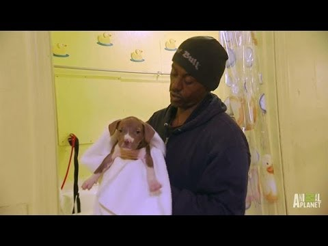 Meet Will, the Puppy Man | Pit Bulls and Parolees