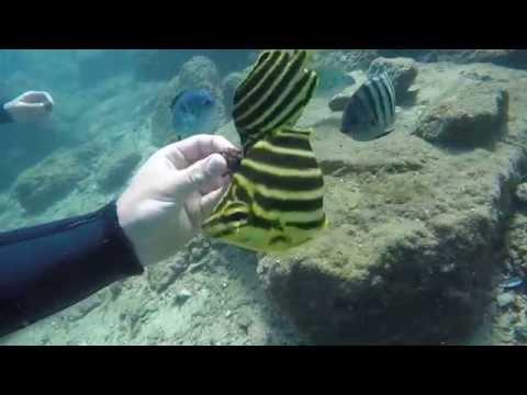 Scuba Diving Gold Coast