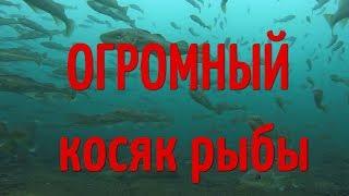 Подводное видео.Как клюёт навага. Рыбалка.