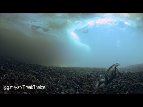 Diving under the Arctic Sea Ice