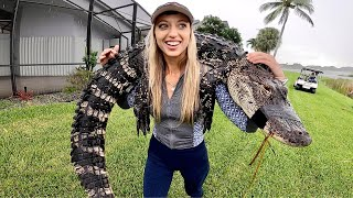 HOW TO Catch, CLËAN and Cook an ALLIGATOR (EMERGENCY NUISANCE GATOR)