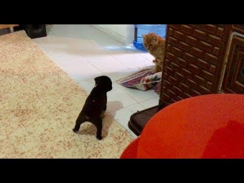 Kedi Ile Köpek Aynı Evde İlk Kez Karşılaşırsa