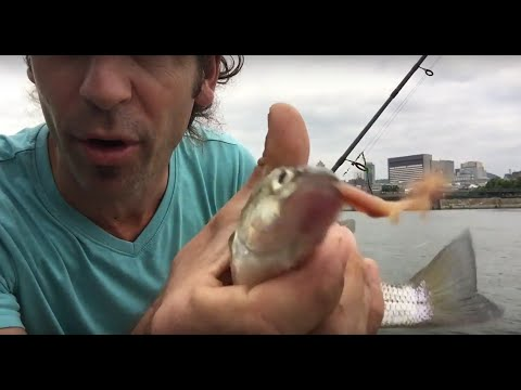 Fishin'Clip - Early Morning Fishing In The Old Port