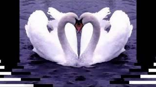 С днем Святого Валентина.mpg