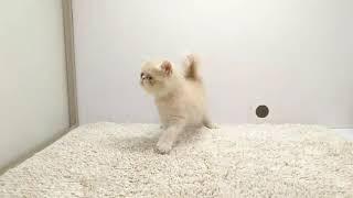 他にもご家族募集中のワンちゃん、猫ちゃんを毎日更新中!! ↓詳しくは...