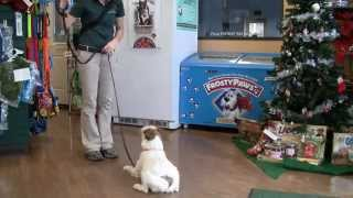 Lodge And Learn Training Program At Rover Oaks Pet Resort