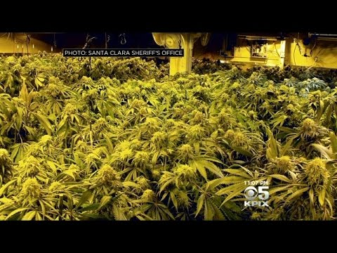 Fake Furniture Store In Gilroy Discovered To Be Front For Huge Marijuana Growing Operation