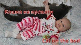 VLOG: Кошка нежится на Сашиной постели\ Cat is relaxing on Sasha's bed