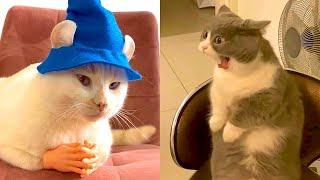 BEST DANK CAT MEMES COMPILATION OF 2021 PART 44 (Funny Cats)