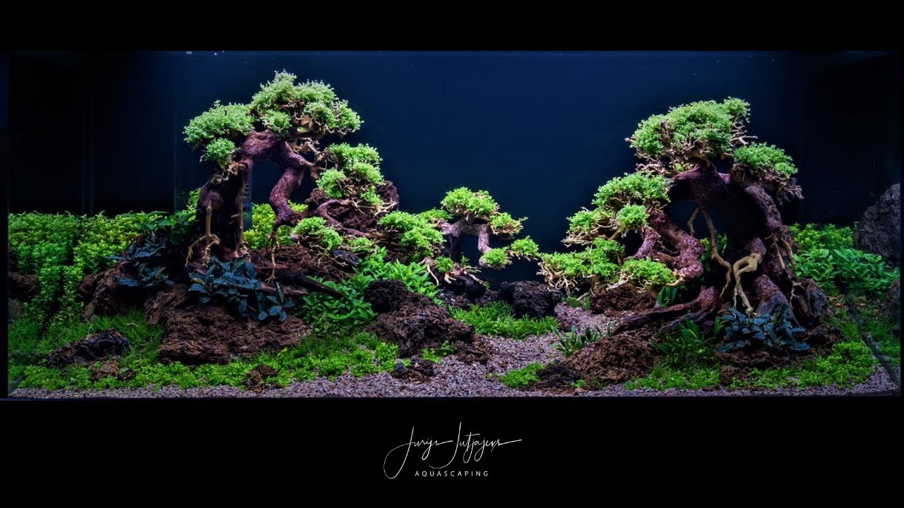 Bonsai Tree Aquascape Tutorial with Adrie Baumann - YouTube