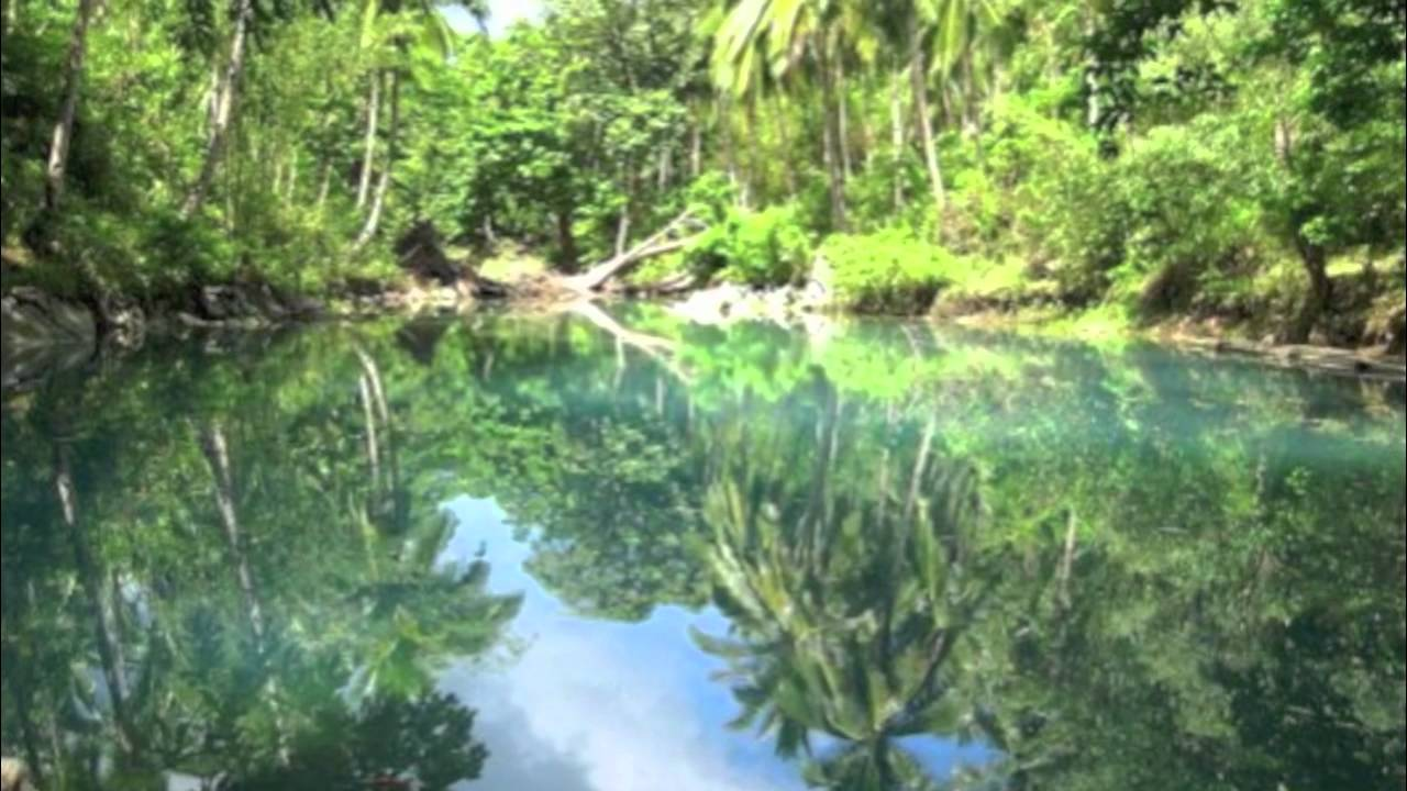 Tropical Rainforest Biome Project - YouTube