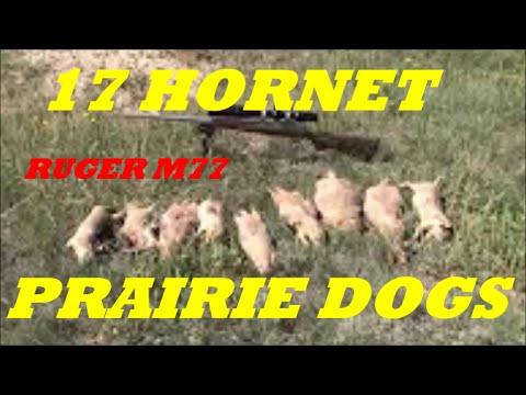 17 HORNET PRAIRIE RAT CONTROL