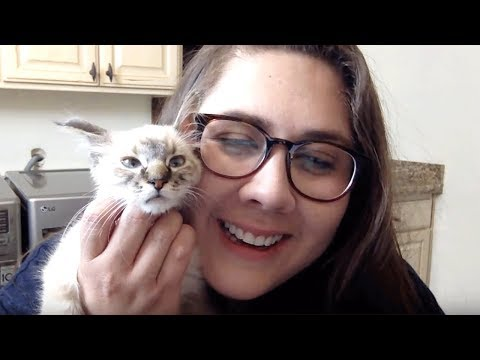 Live Kitten Q&A - Stacy & Pipsqueak