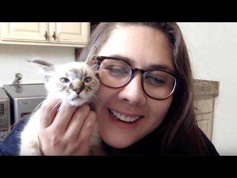 Live Kitten Q&A - Stacy & Pipsqueak