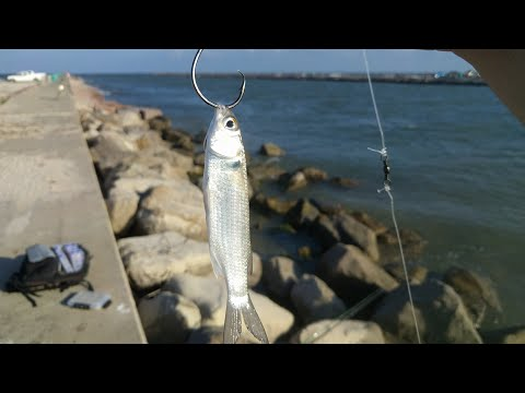 Fishing With Live Bait At The Jetties Livestream