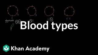 Blood types | Human anatomy and physiology | Health & Medicine | Khan Academy