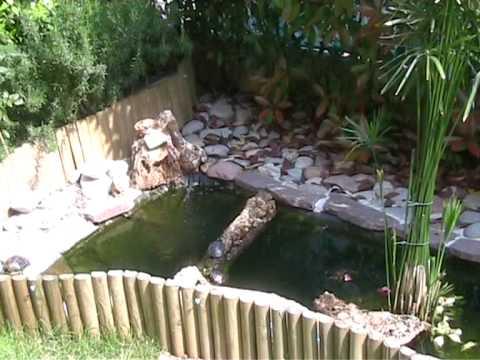 Le mie 4 tartarughe d 39 acqua spiate nel laghetto a prendere for Laghetto tartarughe inverno