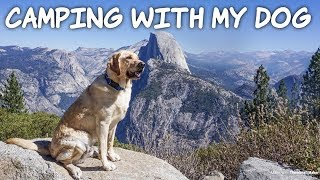 Camping with my Dog in Yosemite - Zazu the Labrador