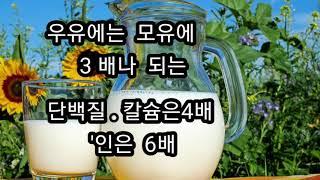 우유  단백질  '카제인'은  어떤물질?