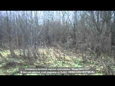 охота на зайца осенью Великие Луки