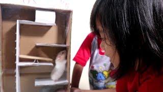 hamster-yaya-latihan-ketangkasan-melewati-labirin-escape-from-maze-obstacle-course
