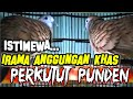 Irama Istimewa Perkutut Lokal Asli Pikatan Punden Keramat Gacor  Mp3 - Mp4 Download