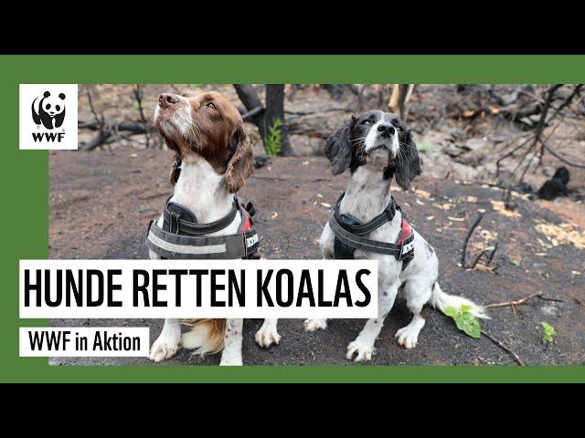 Hunde retten Koalas in Australien I WWF in Aktion