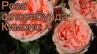 Роза флорибунда Кимоно (rose kimono) ???? флорибунда роза Кимоно обзор: как сажать, саженцы розы Кимоно