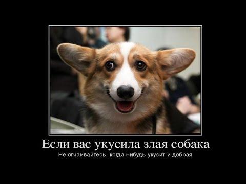 ТОП Самые Смешные демотиваторы про собак Видео демотиватор Youtube смех в картинках мемы про собак