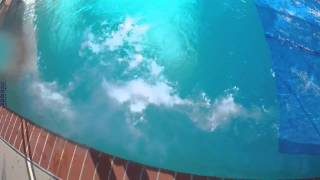 15 pounds of dry ice in pool plus underwater shots
