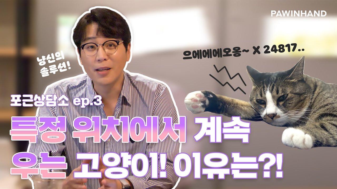 [포근상담소🐱]ep3 | 특정 장소에서만 우는 고양이...대체 이유가 뭐니?!