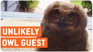Curious Owl Says Hello | Hoo Are You
