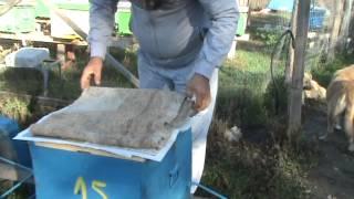 Repeat youtube video Impachetarea pentru iernat a familiilor de albine