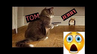 Tom and Jerry in real life |funny cats vs mouses|  | Top Cats Video Compilation
