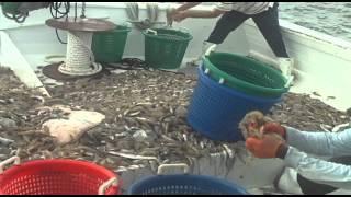 Coastal Traditions - A Shrimper's Life
